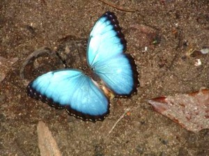 There are numerous sorts of butterflies